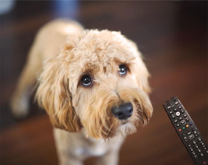 Ben je verzekerd wanneer je huisdier schade maakt?