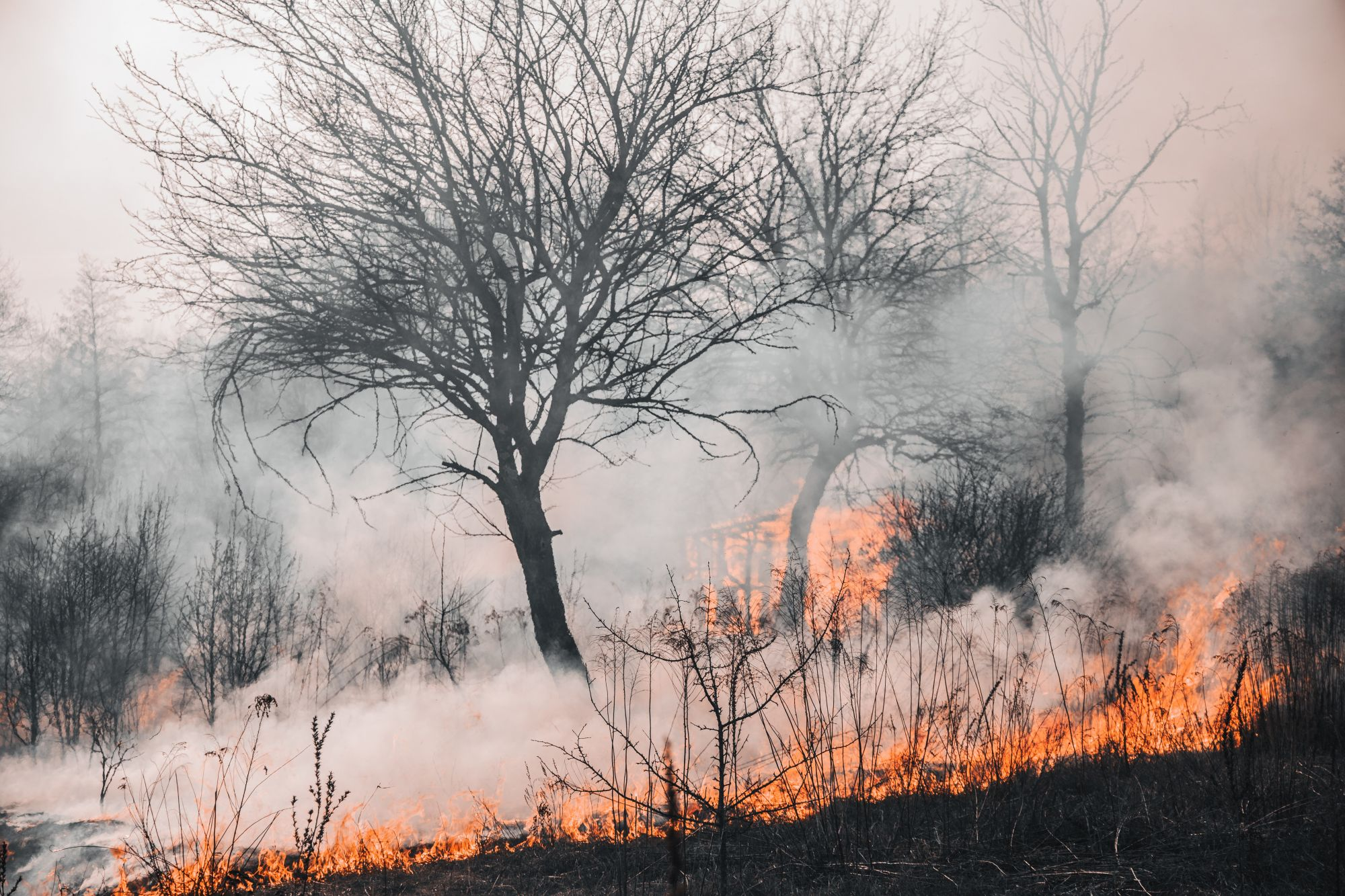 Hoe ben je goed verzekerd tegen bosbranden op vakantie?